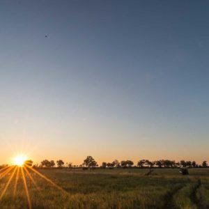 Motswiri Camp Botswana