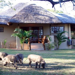 A Bush Break to Bolster Your Spirits – Bonamanzi Game Lodge
